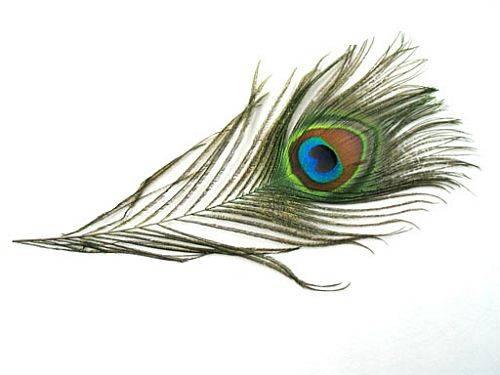 Pfauenauge